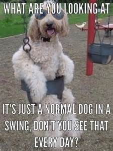 Pinterest Funny Animal Pictures with Captions