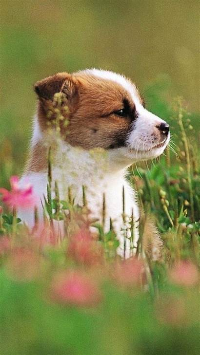 Iphone Wallpapers Phone Puppies Puppy Dog Dogs