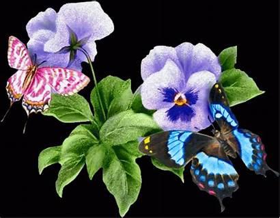 Flores Mariposas Imagenes Bonitas Violetas Dias 1439