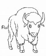Bison Coloring Printable Colouring Buffalo Animal Kitten Bestcoloringpagesforkids Coloringbay Sheet Adult Toddler Dog Barracudas sketch template