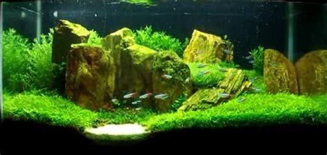 Aquascape Canada by Aquarium Plants Canada Live Aquatic Plants For Fish Tanks