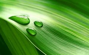 Download Wallpaper 1920x1200 Piece of fresh green leaves ...