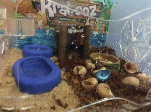 How To Set Up A Crabitat  15 Steps  With Pictures