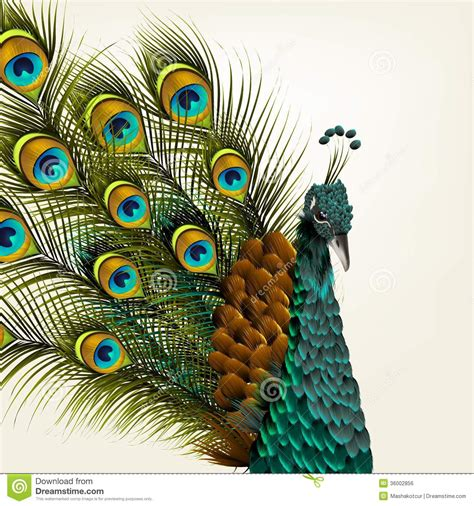cute background  vector detailed peacock  white