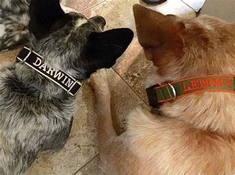 Chelsea Dog Collar | Dogs, Dog collar, Chelsea