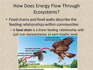 Energy Flow And Nutrient Cycling In Ecosystems