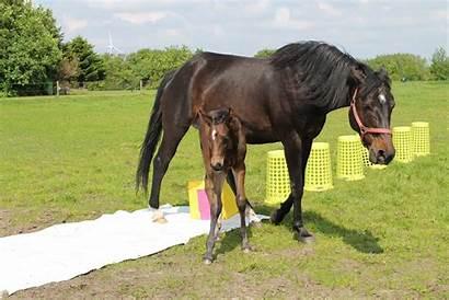 Scary Horse Dam Follow Foal