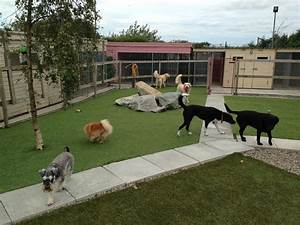 how to select the best pet boarding facilities liveblog spot With boarding my dog
