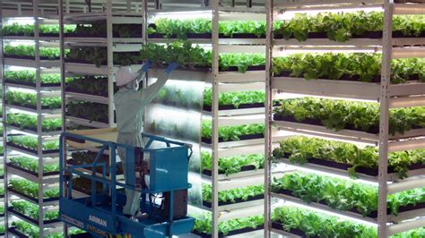 growing vegetables indoors with led lights japan 39 s future farms science technology al jazeera
