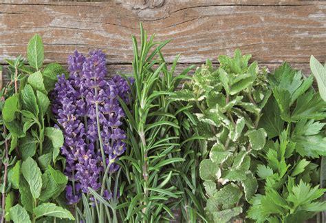 Kräuter Im Garten Pflanzen Zeitpunkt by Kr 228 Uter Und Pflanzen F 252 R Katzen In Der Wohnung Im Garten