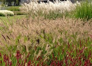 En el jardin: gramíneas: tomá nota y plantalas en la primavera