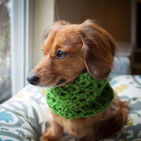 shipping puppy scarf dog scarf cowl dachshund