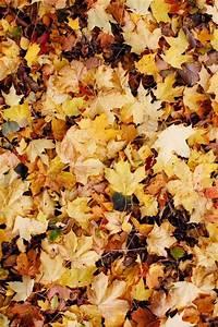 Schöne Halloween Bilder : autumn leaves ideen f r den herbst herbst bilder herbst und herbststimmung ~ Eleganceandgraceweddings.com Haus und Dekorationen