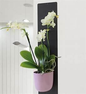 Vertikaler Garten Kaufen : orchideentopf magnetisch im greenbop online shop kaufen ~ Lizthompson.info Haus und Dekorationen