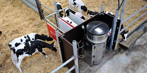 automatic calf feeders lely dairy products automatic calf feeders