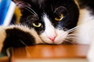 cat uti feline urinary tract infection checkupkit