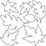 Leaves Fall Clip Coloring Maple Abcteach Leaf Oak Printable Autumn Pages Colouring Template Clipart Tree Printables Sheet Templates Sheets Drawing sketch template