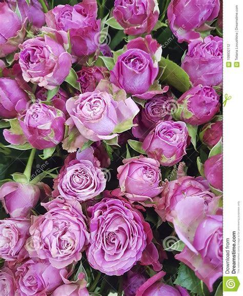 Frasi per anniversario di matrimonio le 60 più belle. Bello Anniversario Rosa Del Fondo Delle Rose, Matrimonio, Freschezza Fotografia Stock - Immagine ...