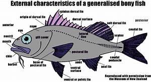 Science Class  Vocabulary  8  Complex Animals