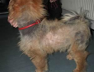 treating alopecia in dogs P80TDg1GFo9SidY4lvzypvgGUGgyGi61GAZmq9v51bU