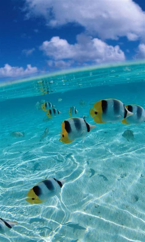 fondo pantalla mar  peces