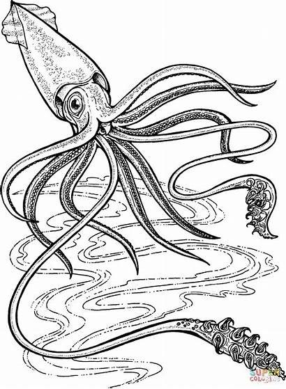 Squid Coloring Giant Ocean Pages Printable Deep