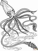Squid Coloring Giant Printable Ocean Pages Deep Supercoloring Colossal Sea Drawing Colouring Octopus Animal Animals Creature Crafts Template Colorare Disegni sketch template