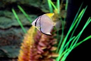 Aquarium Led Beleuchtung : aquarium led beleuchtung selber bauen anleitung ~ Frokenaadalensverden.com Haus und Dekorationen