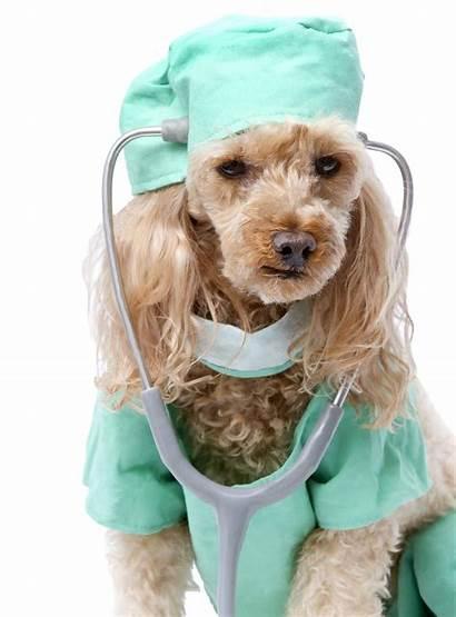Scrubs Dog Animal Pet Need Dev