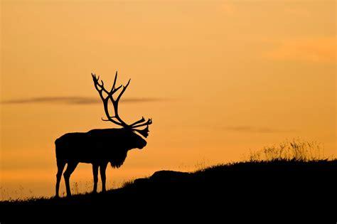 wallpaper landscape deer animals sunset nature