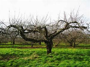 The Orchard Tea Room  U0026 Farm Shop  Pruning Apple Trees Course