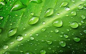 Leaves Water Drops | Best Wallpapers
