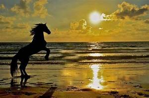 Beautiful Rearing Horse at Sunset | Horses We ℒℴѵℯ ...