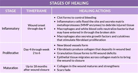 Collagen Dressings For Wound Healing