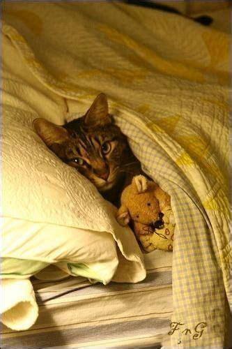 cute cat  bed   teddy bear luvbat