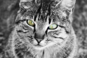 wuermer bei katzen wurmkur natuerliche entwurmungsmittel