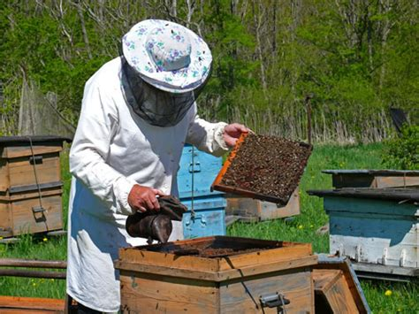 Backyard Honey Bee Hive by Backyard Beekeeping For Beginners Sustainable Farming