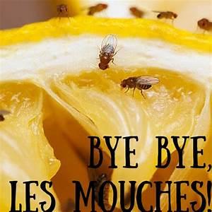 Se Débarrasser Des Mouches Naturellement : comment se d barrasser des maudites mouches fruits naturellement colo imparfaite ~ Melissatoandfro.com Idées de Décoration