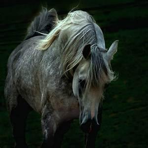 Dapple gray horse | Pets dream | Pinterest