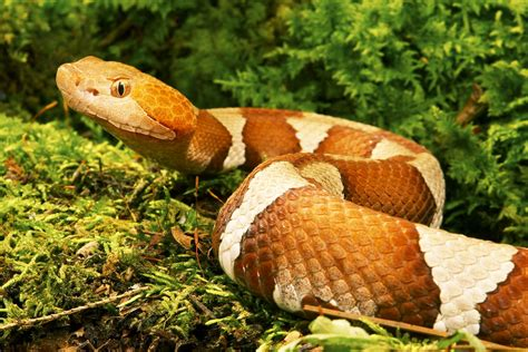 Snakes in Alabama - What to Do