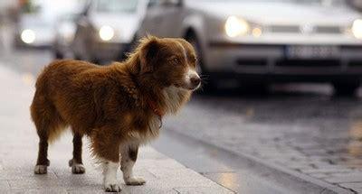 deckungssumme hundehaftpflicht fotolia hund spezial