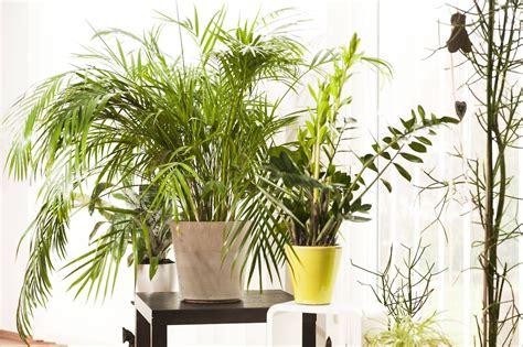 Pflanzen Im Schlafzimmer by Schlafzimmer Sch 246 N Gr 252 Npflanzen Im Schlafzimmer