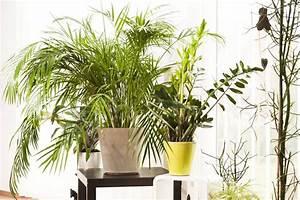 Pflanzen Im Schlafzimmer : frage antwort nr 519 sind pflanzen im schlafzimmer sch dlich n ~ Indierocktalk.com Haus und Dekorationen
