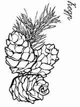 Pine sketch template