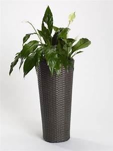 Www Blumenkübel De : blumenk bel aus polyrattan grau 28 x 28 x 60 cm hoch rund blumenk bel m bel und wohnen ~ Sanjose-hotels-ca.com Haus und Dekorationen