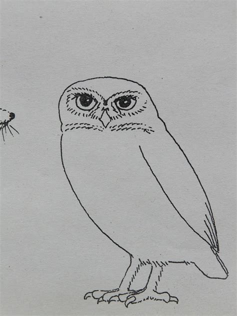 eule malen einfach kostenloses foto eule vogel tier malvorlage kostenloses bild auf pixabay 8866