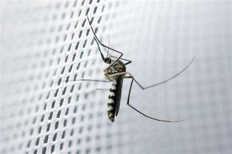 Mücken Im Haus by Die Besten Tipps Und Tricks Gegen Fliegen Und M 252 Cken Im