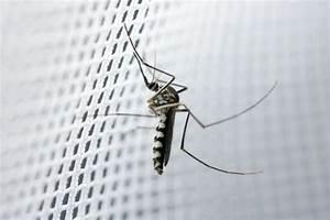 Mückenplage Im Haus : die besten tipps und tricks gegen fliegen und m cken im haus wohnungs ~ Orissabook.com Haus und Dekorationen