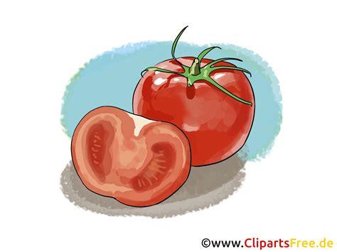 tomaten clipart bild illustration