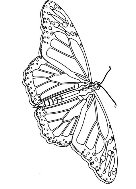 Monarch Butterfly Coloring Pages | Butterfly coloring page